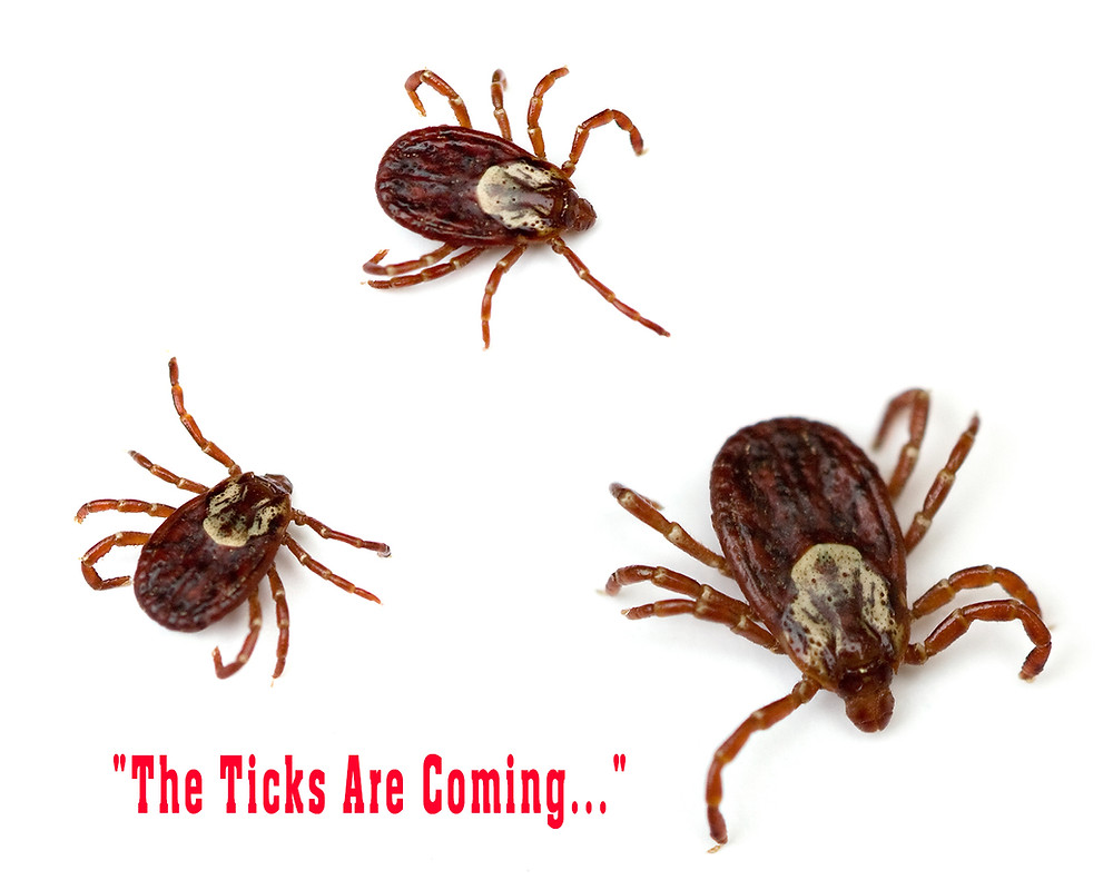 what causes tick infestations and how to get rid of ticks