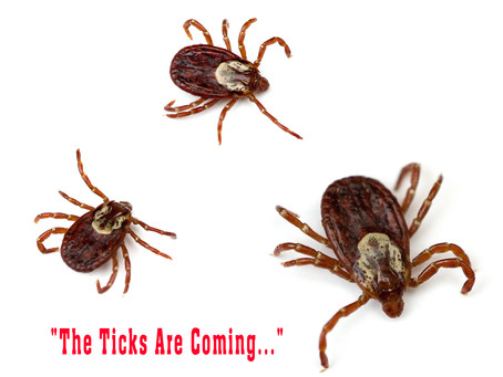 The Invasion of the Ticks, What It Means & What You Can Do