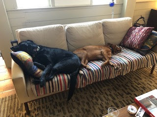 dogs sleeping on the couch