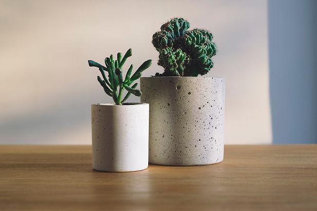 houseplants-drawing-frea.jpg