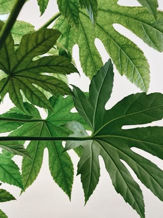 zimmerpflanze-zeichenkurz-2.jpg