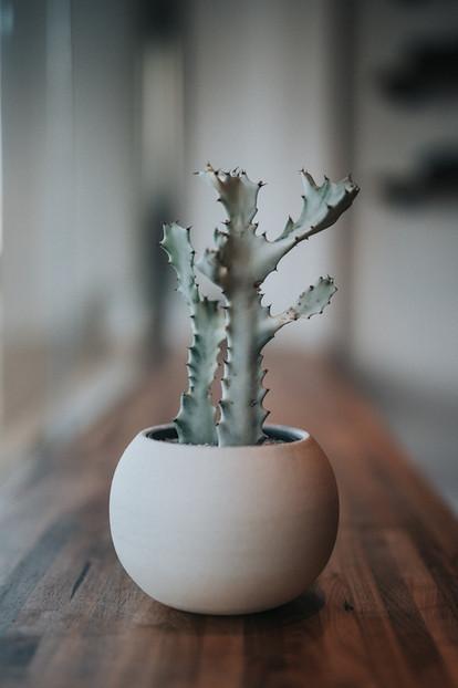 zimmerpflanze-zeichenkurz-5.jpg