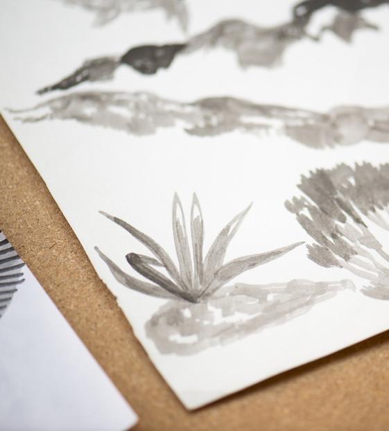 zimmerpflanze-zeichenkurz-3.jpg