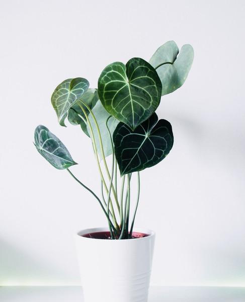 zimmerpflanze-zeichenkurz-1.jpg