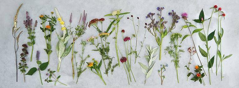 TOMA Biologisch geteelde bloemen TOMA