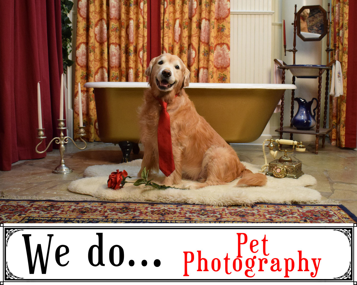 We Do Pet Photography
