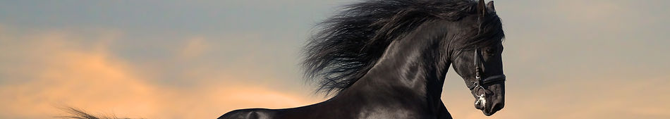 Anna Sewell - Black Beauty stripe.jpg