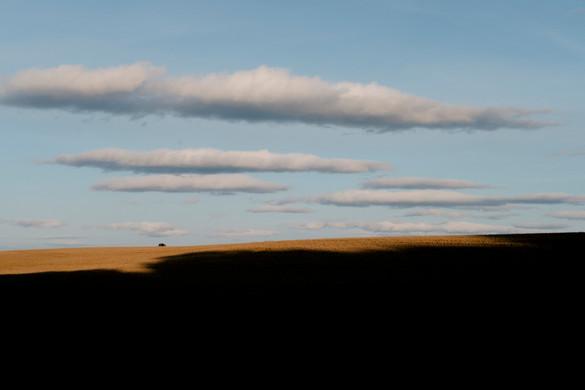 Shadow Fields.jpg