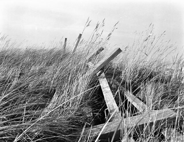 fallen fence.jpg