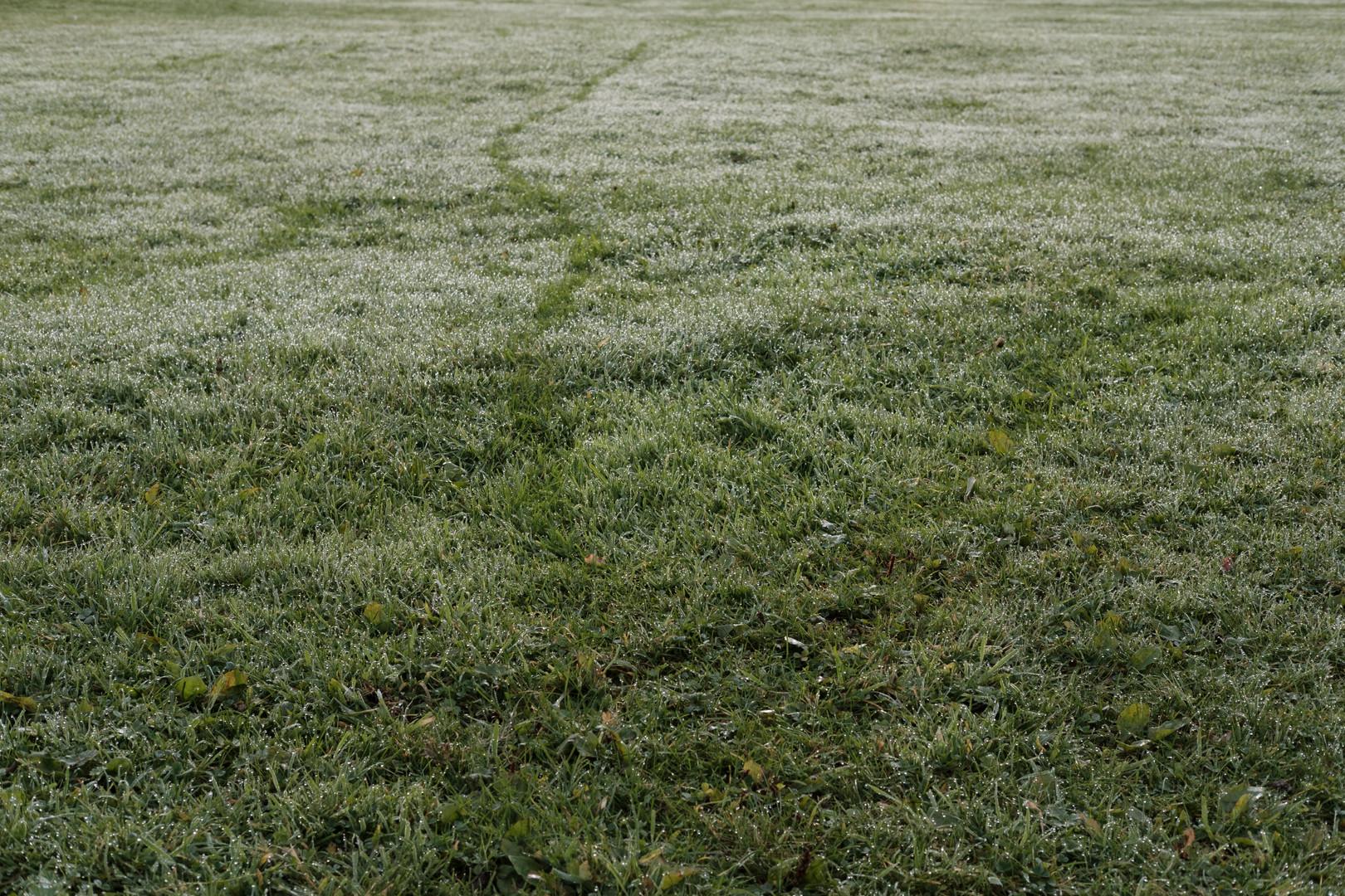 Grassdew.jpg