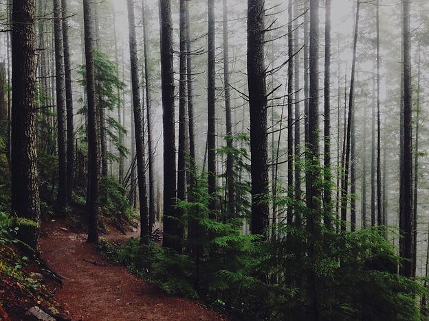Forest%20Path_edited.jpg