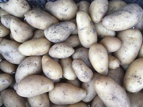 Pommes de terre Amandine / 1 Kg
