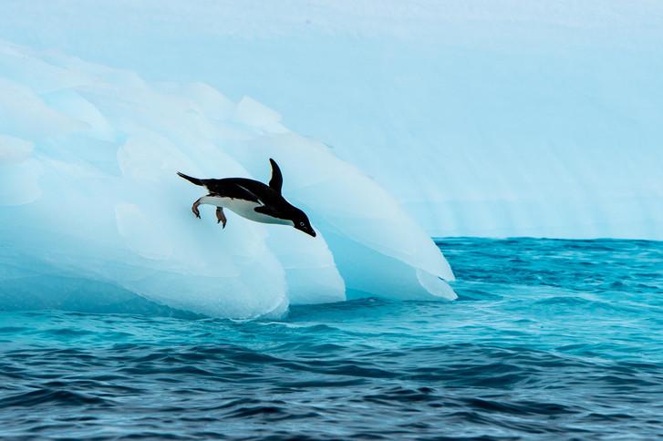 Antarctica_iceberg_adelie-penguin_AE_SMA