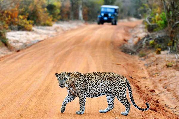 Yala-National-park-Sri-Lanka-6.jpg