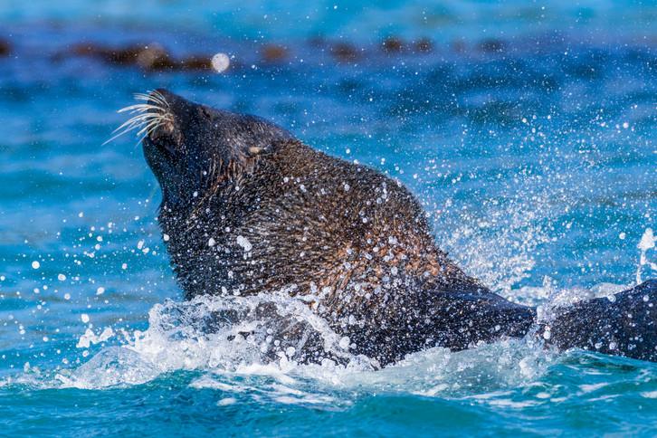 Antarctica_SouthGeorgiaIsland_Seal_029_A