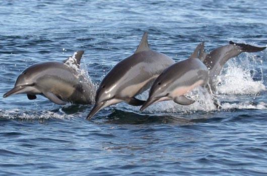 dolphin-watching-1.jpg