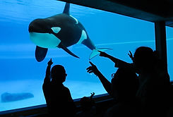 Captive Orca in Canada (Credit: Jo-Anne McArthur / We Animals)