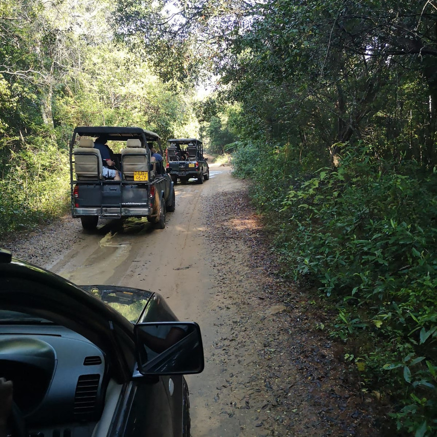 Elephant safari in Wilpattu NP