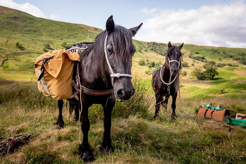 Fell Pony Adventures Fairmile+and+Lucky+