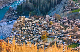 Altit Village Cherry Blossoms.jpg