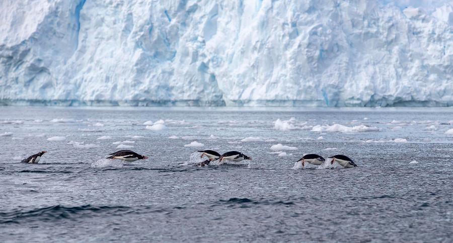 Antarctica_Paradise-Bay_03_AE_SMALL.jpg
