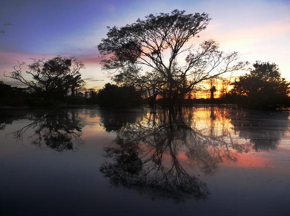 sunset_pampas.png