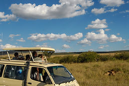 Safari in Kenya (Credit: Jo-Anne McArthur / We Animals)