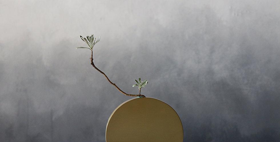 Brass Plant Holder #11M