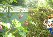fencing.sydney lattice Colorbond Fence l