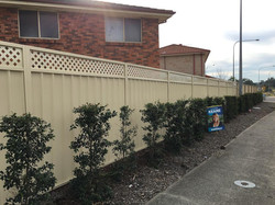 Colorbond Fence with Lattice Inserts