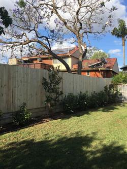 Single Paling Timber Fence