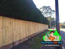 timberfencing.sydney timber fence picture