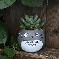 🍃 Happy Succulent Saturday!! Totoro is