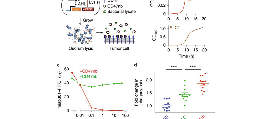 Programmable bacteria induce durable tumor regression and systemic antitumor immunity