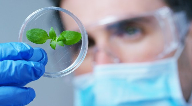 What's Different About Due Diligence in Ag Biotech?