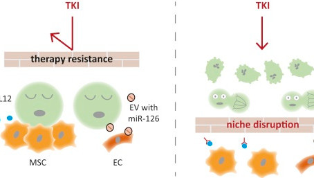 Tumor Cell Dormancy—Triggered by the Niche