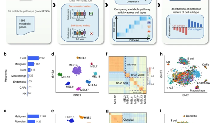 Metabolic landscape of the tumor microenvironment at single cell resolution