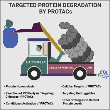 Targeted protein degradation: a promise for undruggable proteins