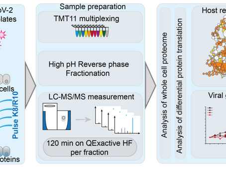 SARS-CoV-2 infected host cell proteomics reveal potential therapy targets