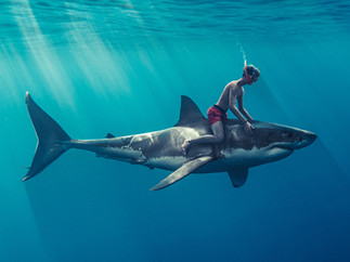 sharkriding.jpg