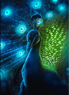 Peacock's Eve Full