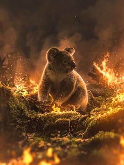Koala's Downfall