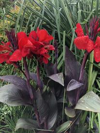 BelindaBaker_flowerfoliage.jpg