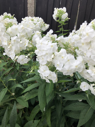 AnneTizzard_whiteflowers.jpg