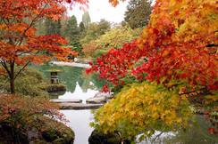 étang automne