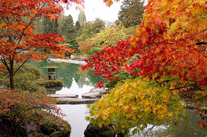 Autumn Pond  秋の池