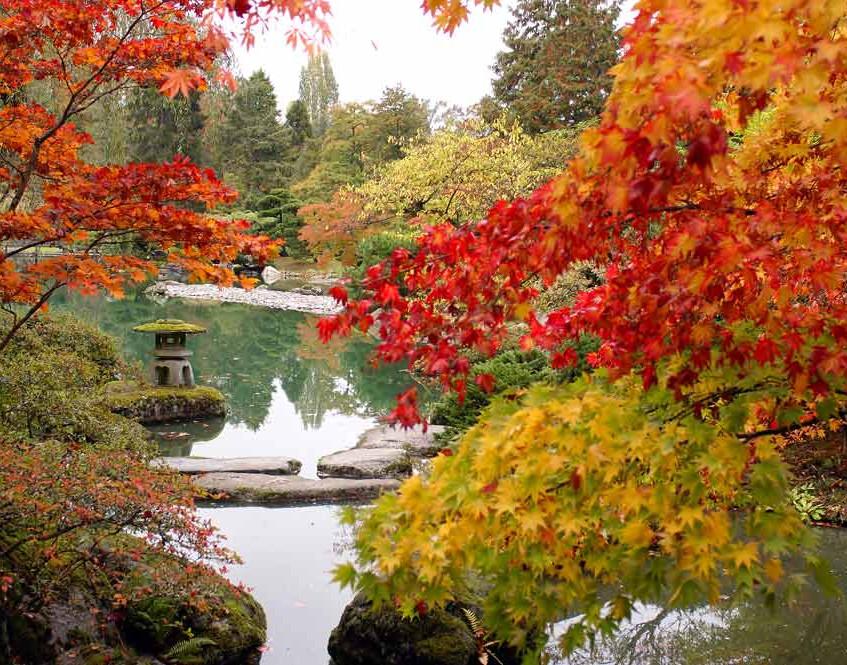 Glorious autumn ponds.