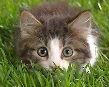 Cat 3 75 Pkg c.jpg