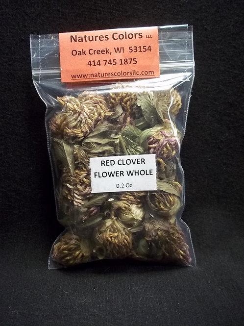 Red Clover - Botanical