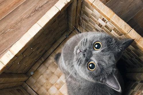 1/2 lb (8 oz) Catnip